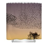 Flock Of European Starlings Shower Curtain