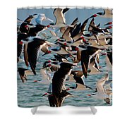Flock Of Terns Shower Curtain