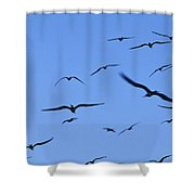 Flocking Frigatebirds Riding Shower Curtain