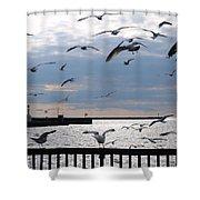 Flocking Gulls Shower Curtain