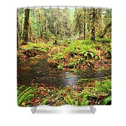 Flood In The Forest Shower Curtain