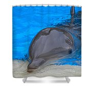 Published Secret Lives Dolphins Shower Curtain