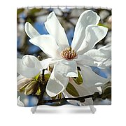 Floral Art Prints White Magnolia Flowers Shower Curtain