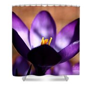 Catching Crocus  Shower Curtain