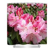 Floral Rhodies Photography Pink Rhododendrons Prints Shower Curtain by Baslee Troutman