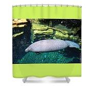 Florida Manatee Shower Curtain
