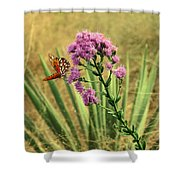 Florida Paintbrush Shower Curtain