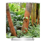 Florida Palms And Ferns Shower Curtain