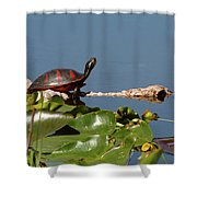 Florida Redbelly Turtle Shower Curtain