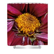 Flower - At The Center Of It All Shower Curtain