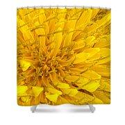 Flower - Dandelion Shower Curtain