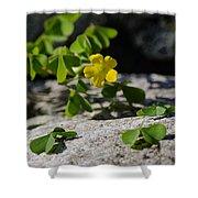 Flower And Dancing Clover Shower Curtain