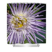 Flower And Spider Shower Curtain