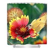 Flower Butterfly Shower Curtain