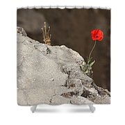 Flower By The Pool Of Bethesda - Israel Shower Curtain