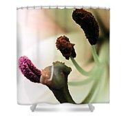 Flower Factory Shower Curtain