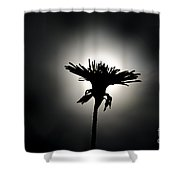 Flower In Backlight Shower Curtain