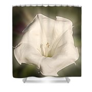 Flower In The Autumn Shower Curtain