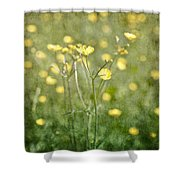 Flower Of A Buttercup In A Sea Of Yellow Flowers Shower Curtain