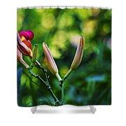 Flower Of Summer Shower Curtain