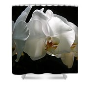 Flower Painting 0004 Shower Curtain