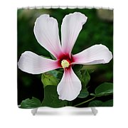 Flower Painting 0007 Shower Curtain