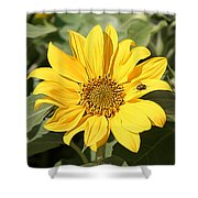 Flower Painting 0010 Shower Curtain