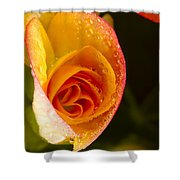 Flower Rieger Begonia 5 Shower Curtain