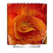 Flower Rieger Begonia 6 Shower Curtain