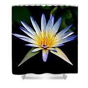 Flower Symmetry Shower Curtain