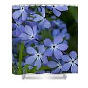 Flower Wild Blue Phlox 1 B Shower Curtain