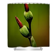 Flowerbuds Shower Curtain
