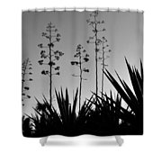 Flowering Agaves Shower Curtain