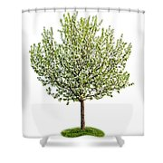 Flowering Apple Tree Shower Curtain