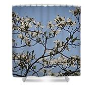 Flowering Dogwood Shower Curtain