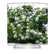 Flowering Snowball Shrub Shower Curtain