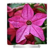 Flowering Tobacco Shower Curtain