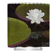 Victoria Amazonica White Flower Shower Curtain