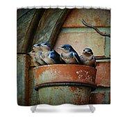 Flowerpot Swallows Shower Curtain by Jai Johnson