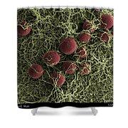 Flowers, Digital Streak Image Shower Curtain