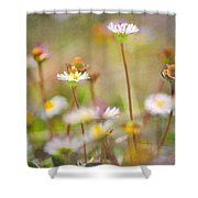 flowers endemic at Sierra Nevada Shower Curtain