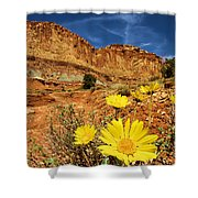 Flowers In The Capitol Shower Curtain