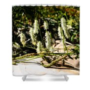 Flowers In The Sunshine Shower Curtain
