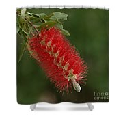 Flowers Of New Zealand 1 Shower Curtain