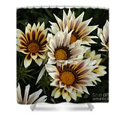 Flowers Of New Zealand 2 Shower Curtain