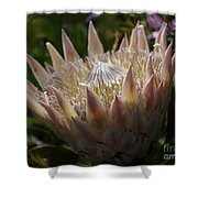 Flowers Of New Zealand 3 Shower Curtain