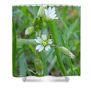 Flowers Of The Grass Shower Curtain