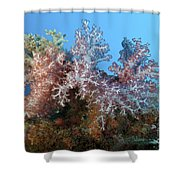 Fluffy Brown, Pink And Red Shower Curtain