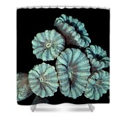 Fluorescent Coral In In White Light Shower Curtain