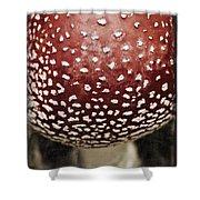 Fly Agaric Mushroom Shower Curtain